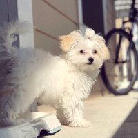 Pet Botanics Mini Training Rewards Dog Treats uploaded by Tara N.