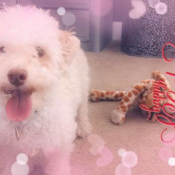 Photo uploaded to #FurryFriends by Scarlett O.