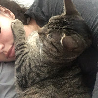 TEMPTATIONS™ Classic Treats For Cats Seafood Medley Cat Treats uploaded by Gabriella S.