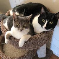 TEMPTATIONS™ MixUps Treats For Cats Surfer's Delight Cat Treats uploaded by Britny G.