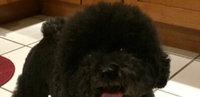 Royal Canin HP Hypoallergenic Hydrolyzed Protein Dog Food 7.7 lb uploaded by Lillian R.