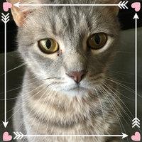 Iams™ Proactive Health™ Healthy Digestion™ Cat Food uploaded by Elizabeth S.