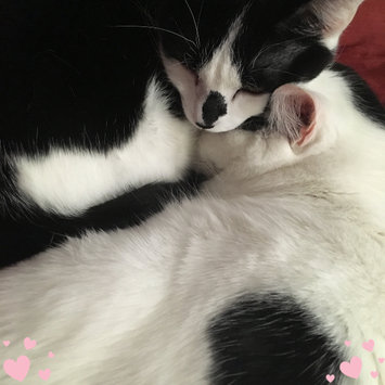 Photo uploaded to #FurryFriends by Nicole P.