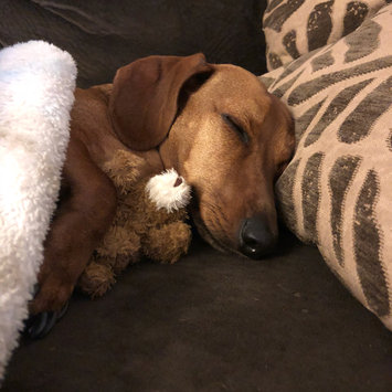 Photo uploaded to #FurryFriends by Samantha R.