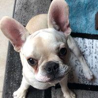 Bil-Jac Little-Jacs® Small Dog Training Treats uploaded by Lynn V.