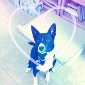 Photo uploaded to #FurryFriends by Brittany T.