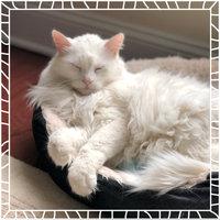 Friskies® Cat Food Indoor Delights uploaded by Matea T.
