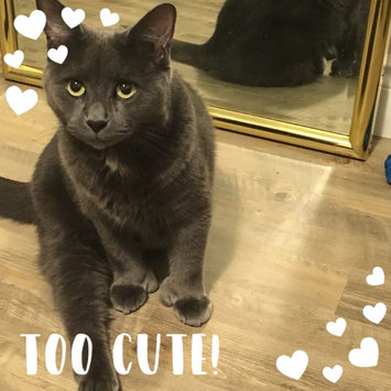 Photo uploaded to #FurryFriends by Erin R.