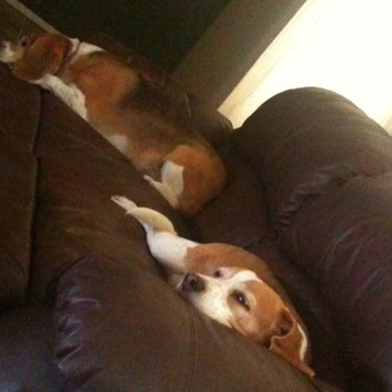 Photo uploaded to #FurryFriends by Laura S.