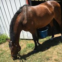 Horsemen S Pride Inc Equine Jolly Ball uploaded by Sarah M.