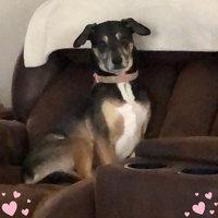 K9 AdvantixA II Flea & Tick Dog Treatment uploaded by Julia C.