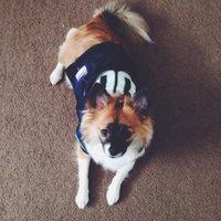 Greenies® Original Petite Dog Treats 36 oz. Box uploaded by Kelsey P.