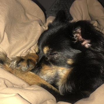 Photo uploaded to #FurryFriends by Grace G.