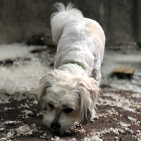Greenies® Original Teenie® Dog Treats uploaded by Nicole G.