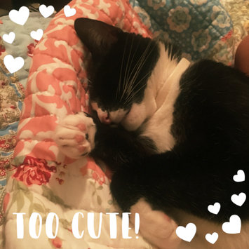 Photo uploaded to #FurryFriends by Grace P.