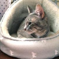 PureBites Freeze Dried Cat Treat uploaded by Nataℓie B.