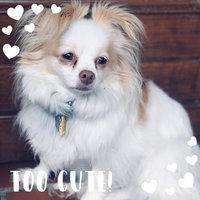 Greenies® Original Teenie® Dog Treats uploaded by Megan N.