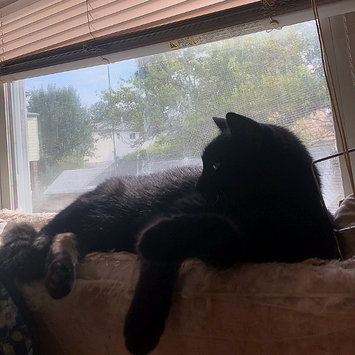 Photo uploaded to #FurryFriends by Evelyn❤️ Y.