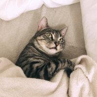 Natural Balance Ultra Premium Dry Cat Food 6 lbs uploaded by Tiffanie S.