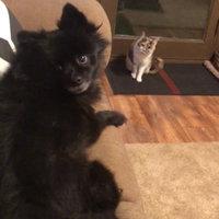 Greenie® Petite Dog Treats 15 oz. Box uploaded by Cassie K.