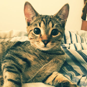Photo uploaded to #FurryFriends by Angela M.