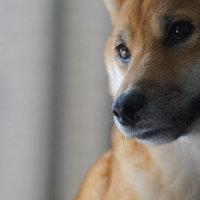 Greenie® Petite Dog Treats 15 oz. Box uploaded by Natascha N.