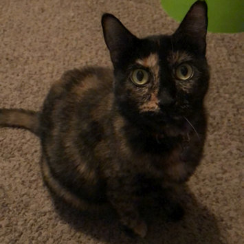 Photo uploaded to #FurryFriends by Taylor M.
