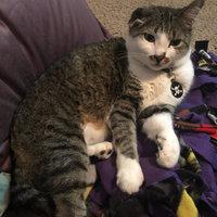 Greenies GREENiESA Cat Dental Treats uploaded by Taylor M.