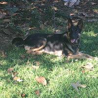 Plato Dog Treats Plato Pet Treats Natural Salmon uploaded by jacyrea t.