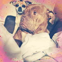 Petrageous Designs City Pets Dog Lover Mug - Black & Cream - 20 oz uploaded by Justine L.