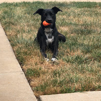 Canine Hardware Chuckit! Fetch Ball,Colors may vary uploaded by Caitlin K.
