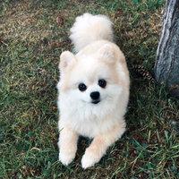 Newman's Own Organics Premium Dog Treats Peanut Butter uploaded by Sierra B.