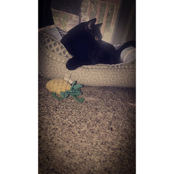 Photo uploaded to #FurryFriends by Brittany P.