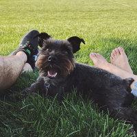 Royal Canin® Miniature Schnauzer 25™ Adult Dog Food 10 lb. Bag uploaded by Yvonny J.