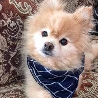 Blue Dog Bakery Softies Peanut Butter Dog Treats uploaded by Tina V.