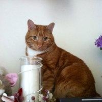 TEMPTATIONS™ MixUps Treats For Cats Farmer's Feast Cat Treats uploaded by Marian B.