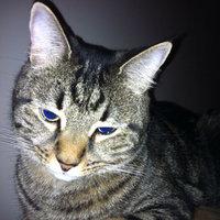 TEMPTATIONS™ MixUps Treats For Cats Catnip Fever Cat Treats uploaded by Marian B.