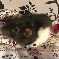 Living World Drops Rat Treat - Honey uploaded by Sarah W.