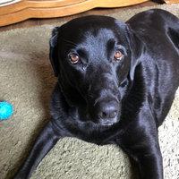 Pedigree® DentaStix™ Deep Clean Dog Treat uploaded by Sarah W.