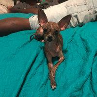 Pedigree® Small Dog Targeted Nutrition Steak & Vegetable Flavor Dry Dog Food uploaded by Jay S.