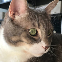 Friskies® Cheesy Craze Crunch Cheddar Swiss Monterey Jack Flavor Cat Treats uploaded by Alexis G.
