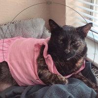 Purina Cat Chow Naturals Plus Vitamins & Minerals Cat Food 13 lb. Bag uploaded by Francheska P.