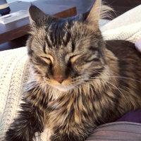 THE BLUE BUFFALO CO. BLUE™ Wilderness® Chicken & Duck Soft-Moist Cat Treats uploaded by Alyssa H.