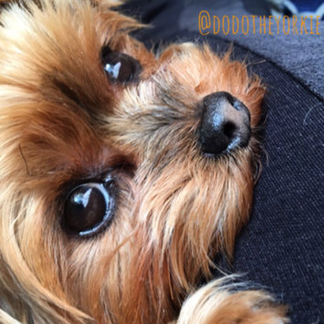 Photo uploaded to #FurryFriends by Mona N.
