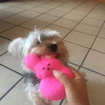 Photo uploaded to #FurryFriends by Katherine F.