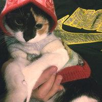 TEMPTATIONS™ MixUps Treats For Cats Surfer's Delight Cat Treats uploaded by Asami M.