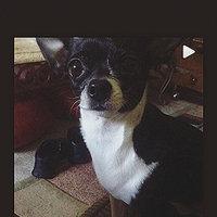 Beggin'®  Strips® Bacon & Cheese Flavors Dog Treats uploaded by Lyzette L.