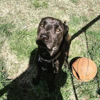 K9 AdvantixA II Flea & Tick Dog Treatment uploaded by Rachel R.