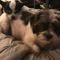 Iams™ Proactive Health™ Adult Optimal Weight Dog Food uploaded by Rachelle W.