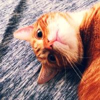 TEMPTATIONS™ Classic Treats For Cats Seafood Medley Cat Treats uploaded by shauna A.